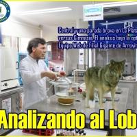 ASÍ LLEGA EL LOBO PLATENSE